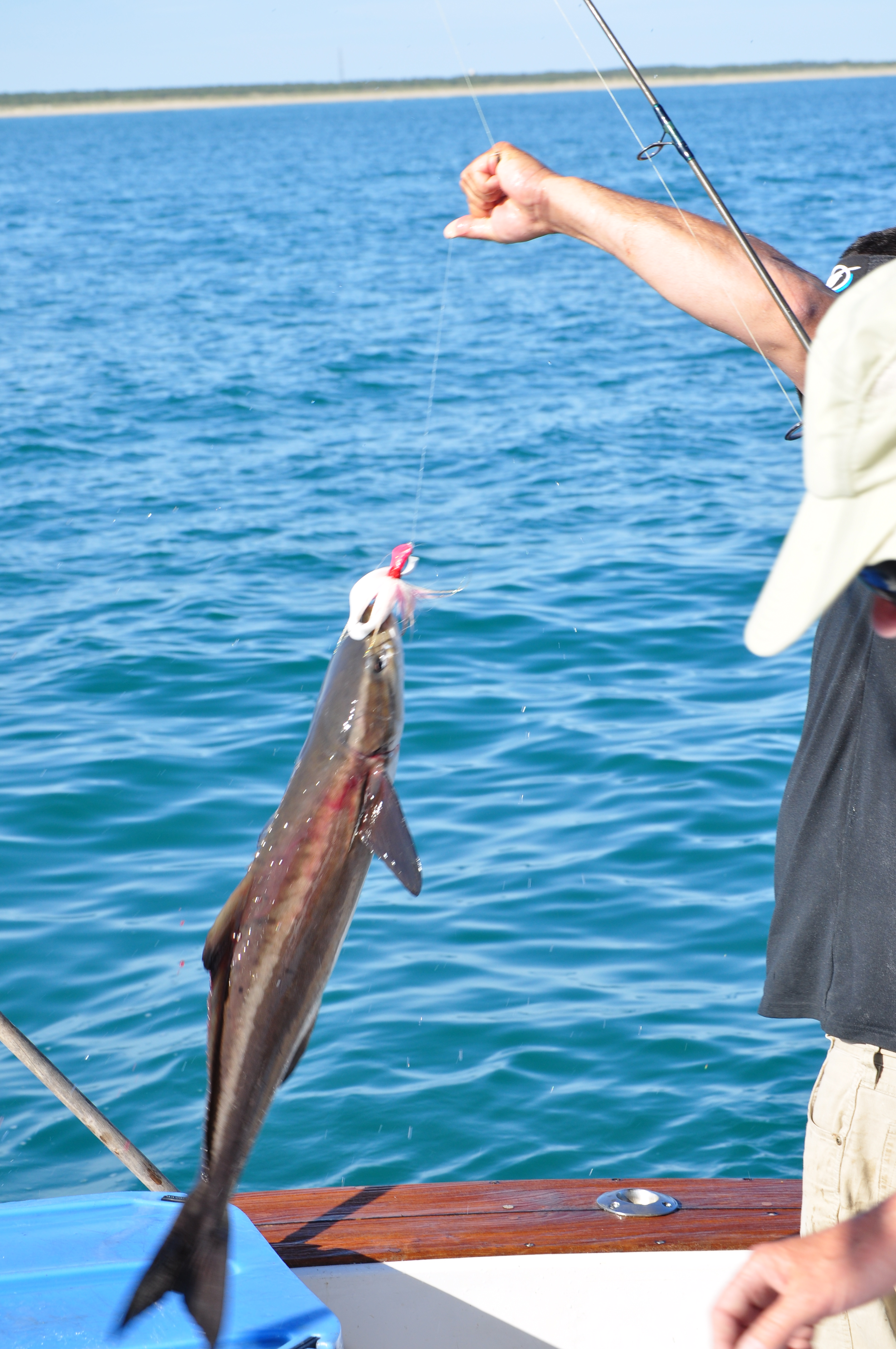 Outer banks charter fishing reports outer banks charters for Obx fishing reports