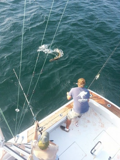 Outer banks fishing report big drum catch and release for Obx fishing report